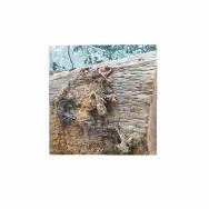 Rongyuanwood Co.,Ltd Solid Wood Flooring