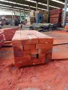 Solid wood fresh African Padouk log in our forest