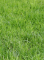 Memory effect 40mm-60mm height 6 color straight&Curly garden decoration artificial grass carpet