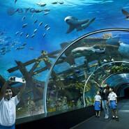 8mm-19mm aquarium hot bending glass