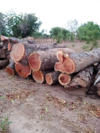 DONGRAY GHANA LIMITED Other Wood