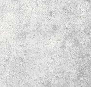 SKYTOUCH CERAMIC PRIVATE LIMITED Rustic Tiles